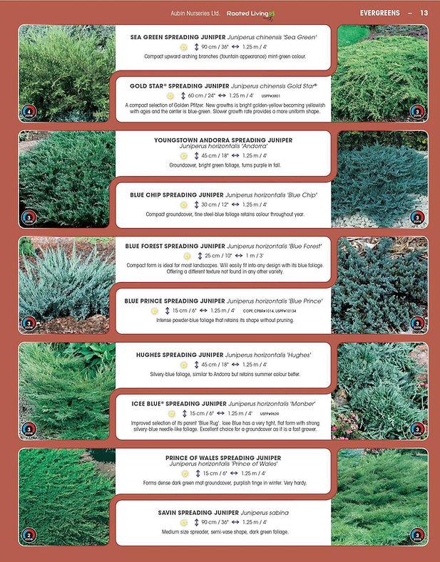 Evergreens-page-001.jpg