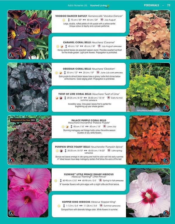 Perennials-page-018.jpg