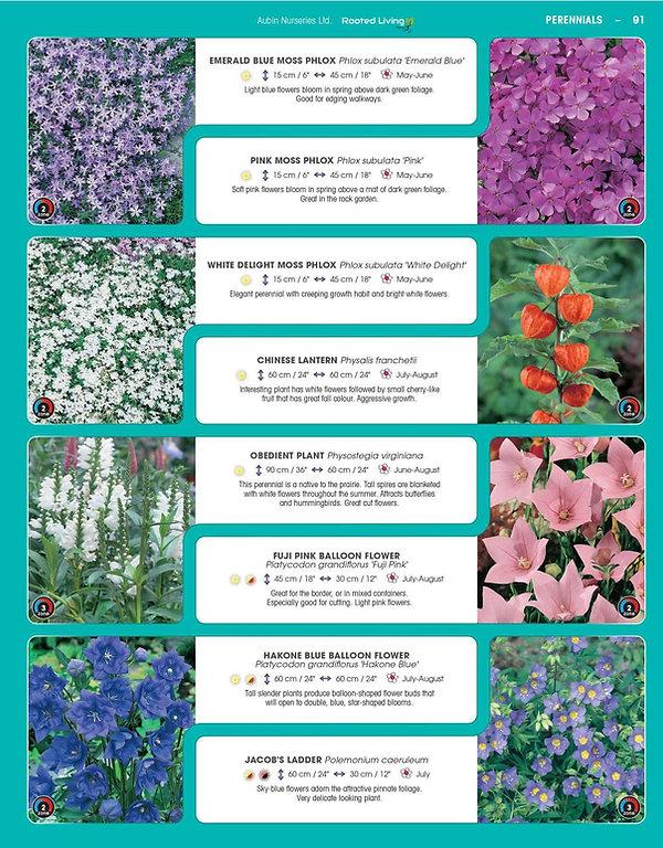Perennials-page-036.jpg
