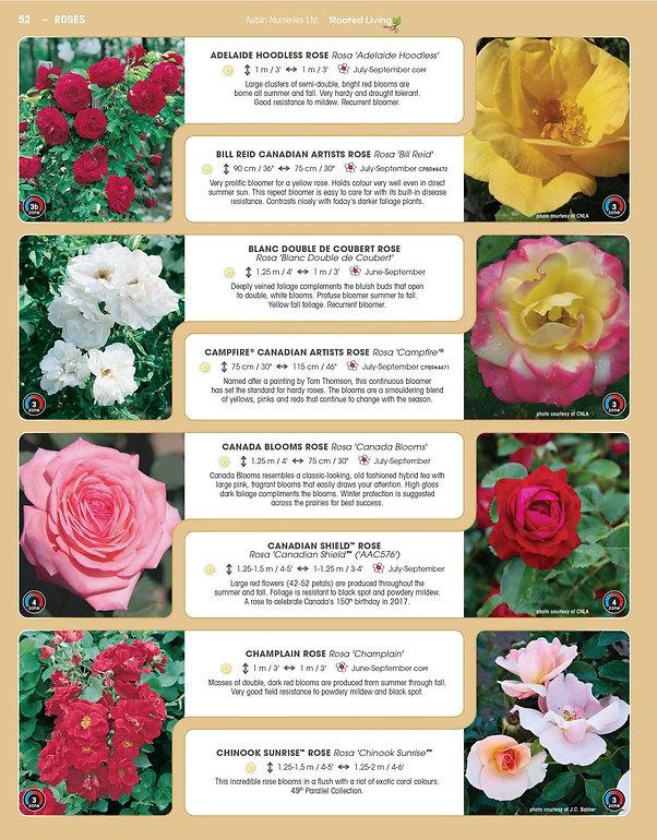 Roses-page-001.jpg