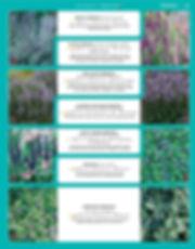 Perennials-page-048.jpg