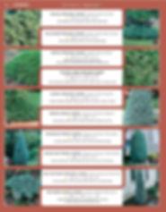Evergreens-page-002.jpg
