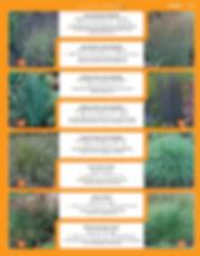 Grasses-page-004.jpg