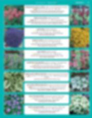 Perennials-page-006.jpg