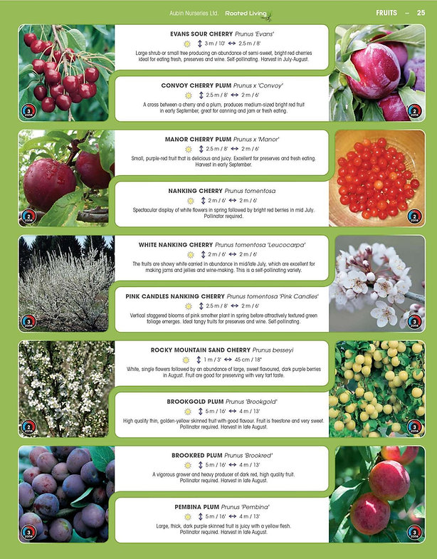 Fruits-page-007.jpg