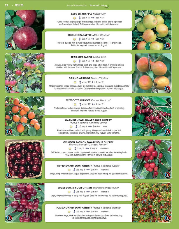 Fruits-page-006.jpg