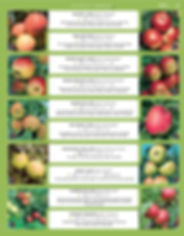 Fruits-page-005.jpg