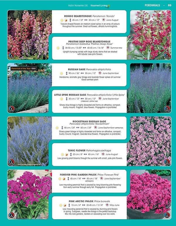 Perennials-page-034.jpg
