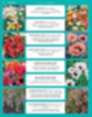 Perennials-page-033.jpg