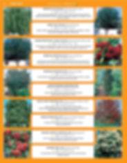 Shade Trees-page-008.jpg