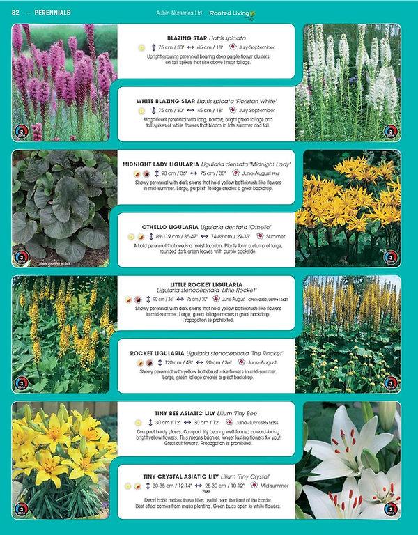 Perennials-page-027.jpg
