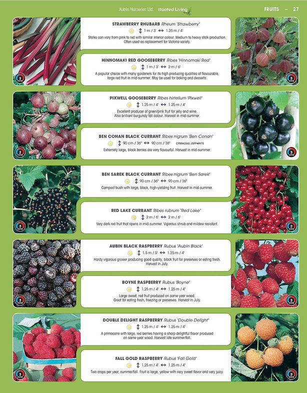 Fruits-page-009.jpg