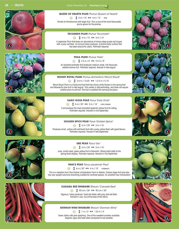 Fruits-page-008.jpg