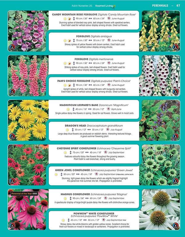 Perennials-page-012.jpg