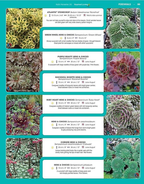 Perennials-page-044.jpg