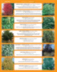 Shade Trees-page-002.jpg
