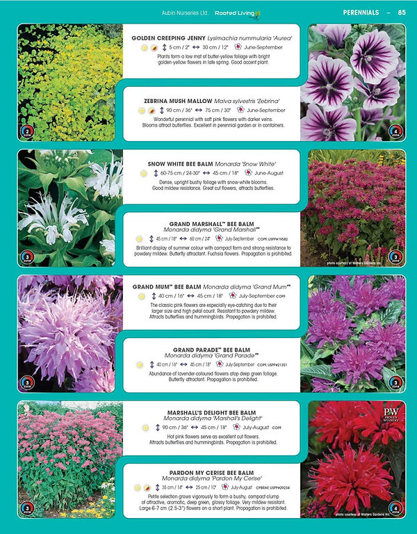 Perennials-page-030.jpg