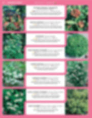 Ornamental Shrubs-page-021.jpg