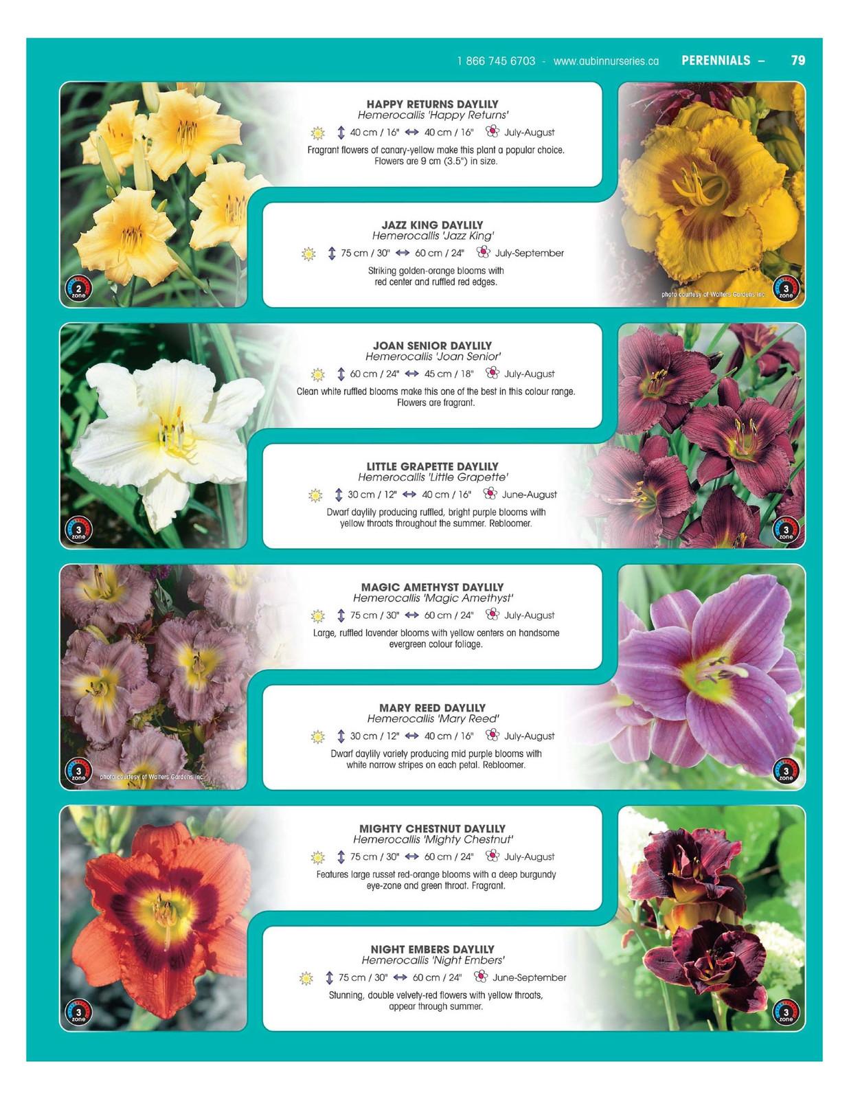 Aubinnurseries Perennials