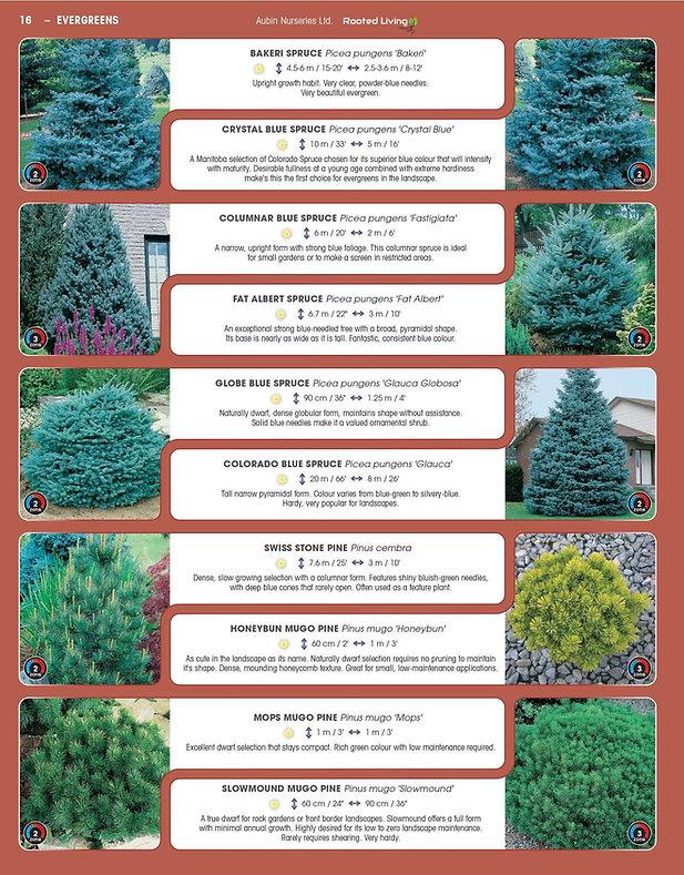 Evergreens-page-004.jpg