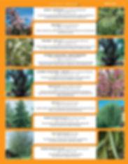 Shade Trees-page-007.jpg