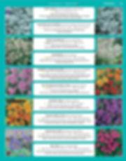 Perennials-page-004.jpg
