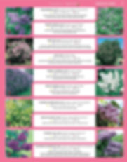Ornamental Shrubs-page-018.jpg