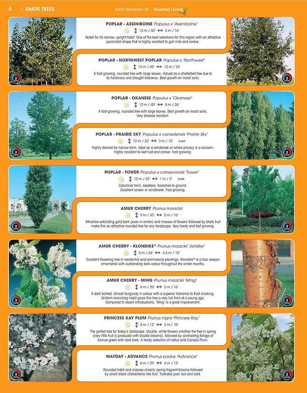 Shade Trees-page-006.jpg