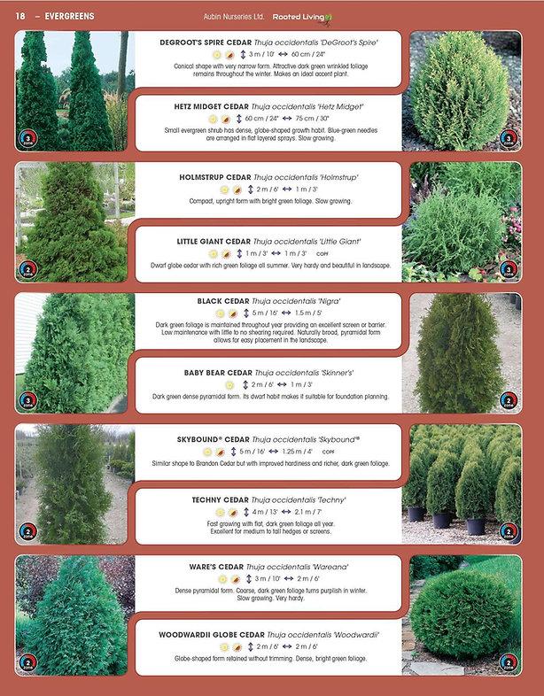 Evergreens-page-006.jpg