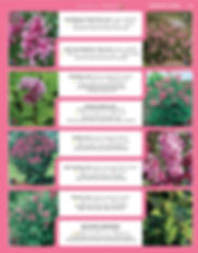 Ornamental Shrubs-page-020.jpg
