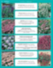 Perennials-page-041.jpg