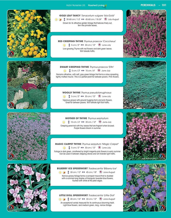 Perennials-page-046.jpg
