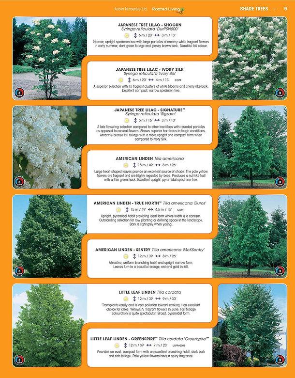Shade Trees-page-009.jpg