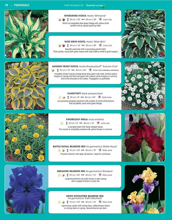 Perennials-page-023.jpg