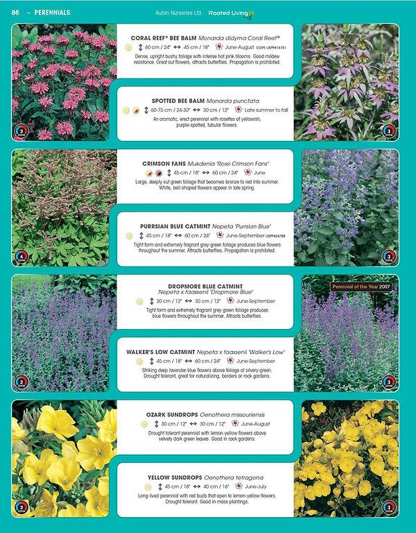 Perennials-page-031.jpg