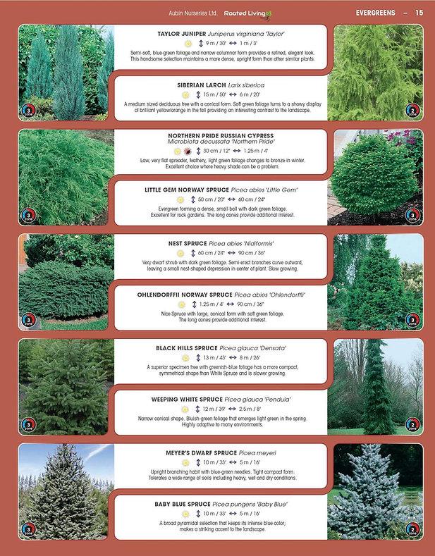 Evergreens-page-003.jpg