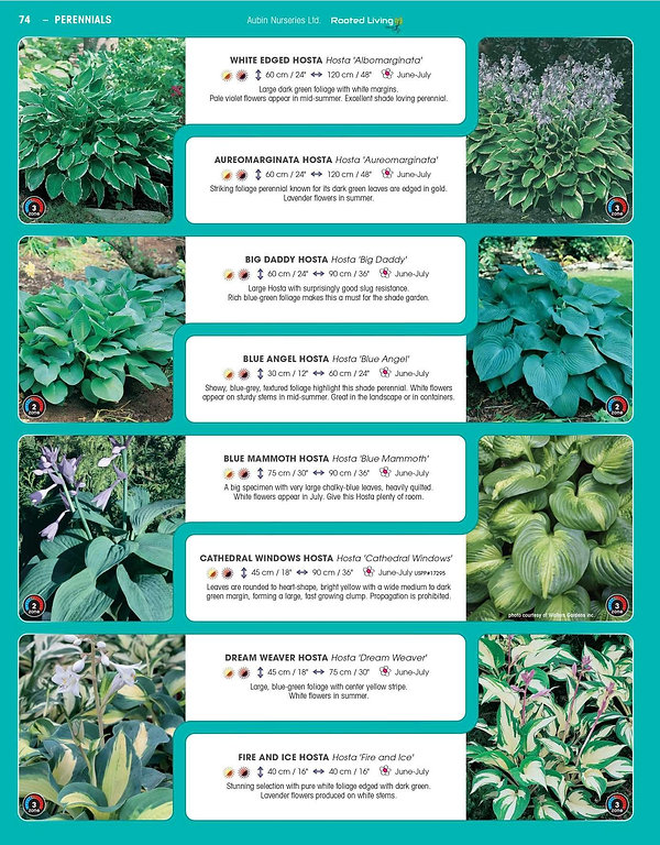 Perennials-page-019.jpg