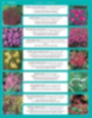 Perennials-page-011.jpg