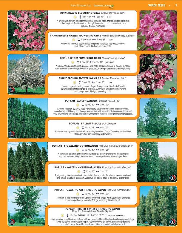 Shade Trees-page-005.jpg
