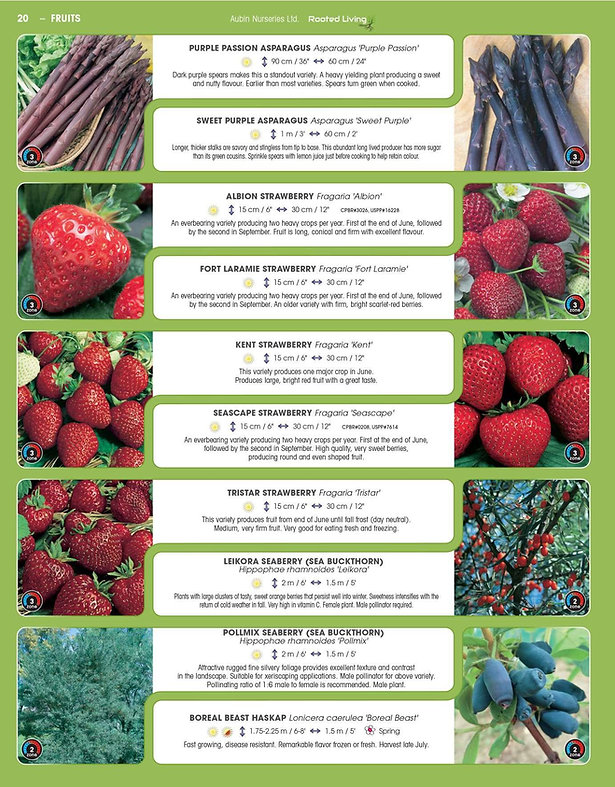 Fruits-page-002.jpg