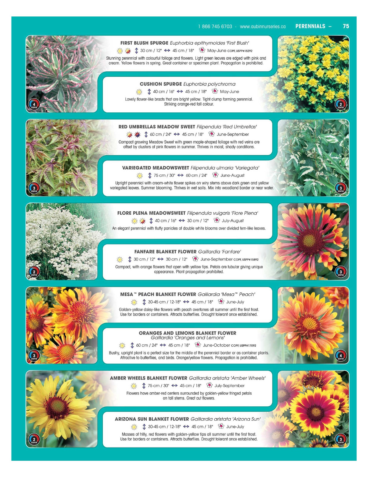Aubinnurseries perennials click on the pdf file at left to download the perennials 2 section of our catalogue or scroll down for your convenience izmirmasajfo