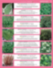 Ornamental Shrubs-page-004.jpg