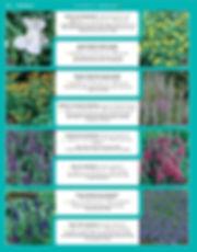 Perennials-page-047.jpg