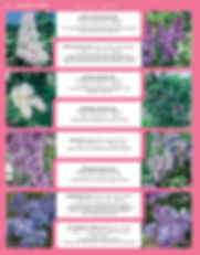 Ornamental Shrubs-page-019.jpg