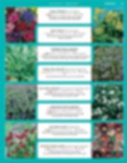 Perennials-page-038.jpg