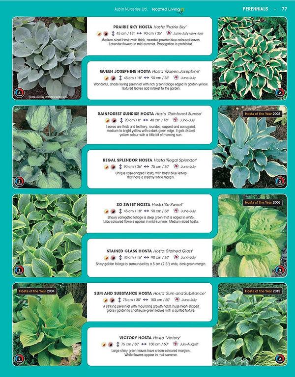 Perennials-page-022.jpg
