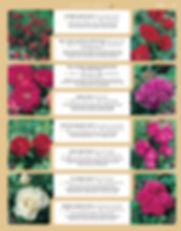 Roses-page-002.jpg
