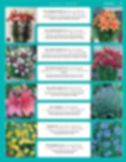 Perennials-page-028.jpg