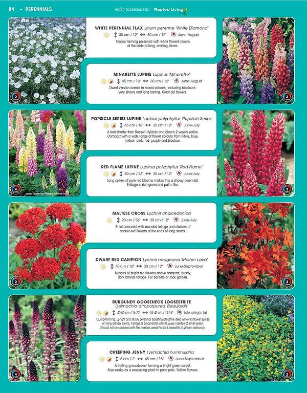Perennials-page-029.jpg