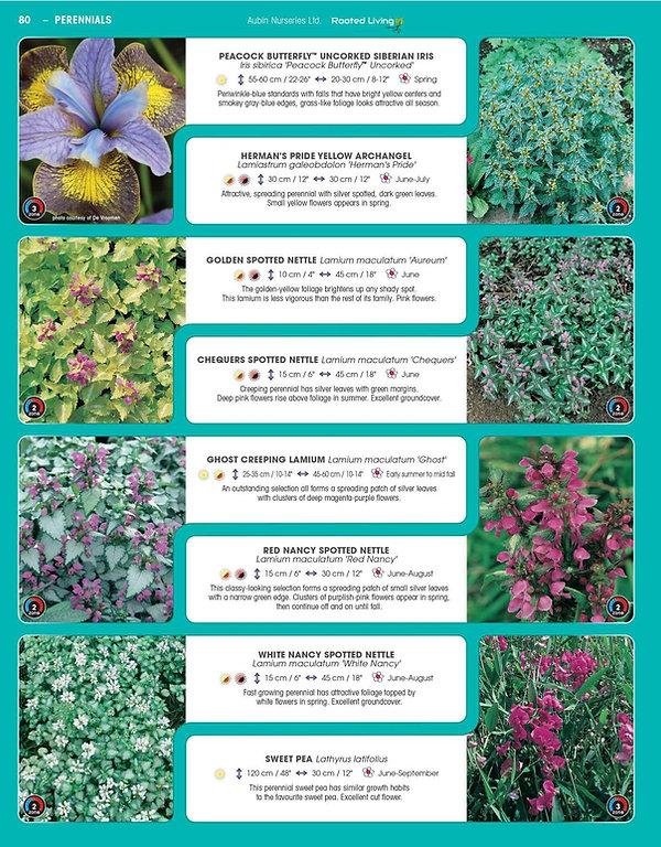 Perennials-page-025.jpg